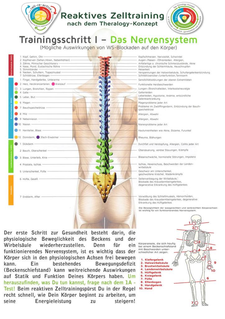 Der erste Schritt zur Gesundheit besteht darin, die physiologische Beweglichkeit des Beckens und der Wirbelsäule wiederherzustellen. Denn für ein funktionierendes Nervensystem, ist es wichtig dass der Körper sich in den physiologischen Achsen frei bewegen kann. Ein bestehendes Bewegungsdefizit (Beckenschiefstand) kann weitreichende Auswirkungen auf Statik und Funktion Deines Körpers haben. Um herauszufinden, was Du tun kannst, frage nach dem 1A - Test! Beim reaktiven Zelltrainingspürst Du in der Regel recht schnell, wie Dein Körper beginnt zu arbeiten, um seine Energieleistung zu steigern!